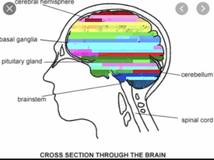 A glitch in your thinking, brain